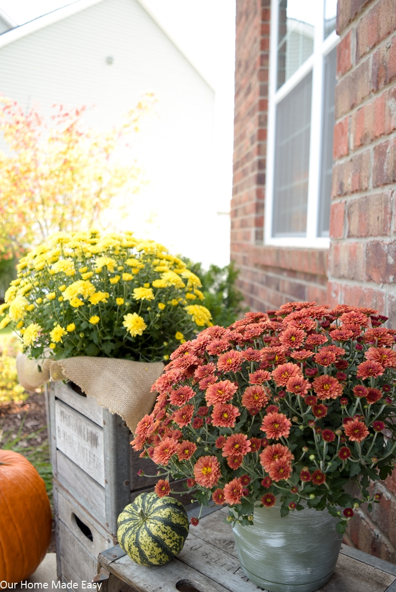 Bright yellow and red mums are the perfect Fall front porch accents