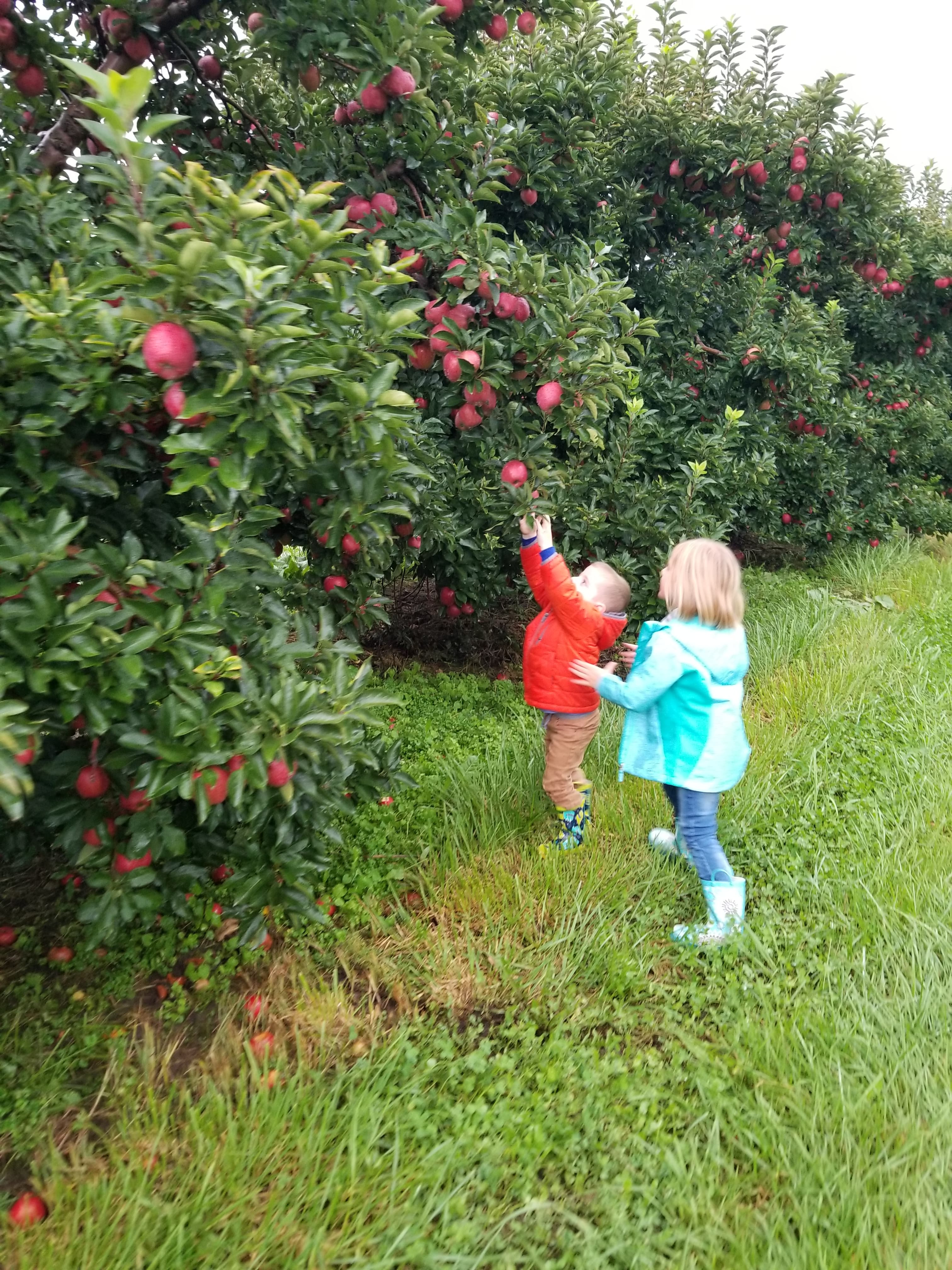 The kids loved picking apples on a day out with the family