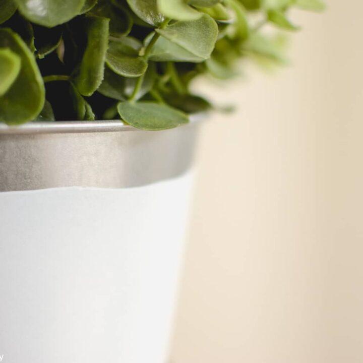 Paint-Dipped Planters with Plasti Dip Spray Paint