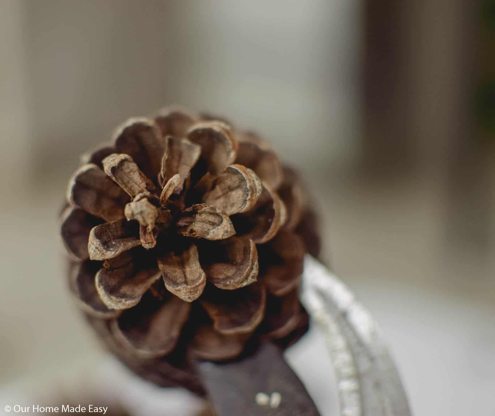 Cut the pinecone into slices based on the size you want on your wood slide ornament